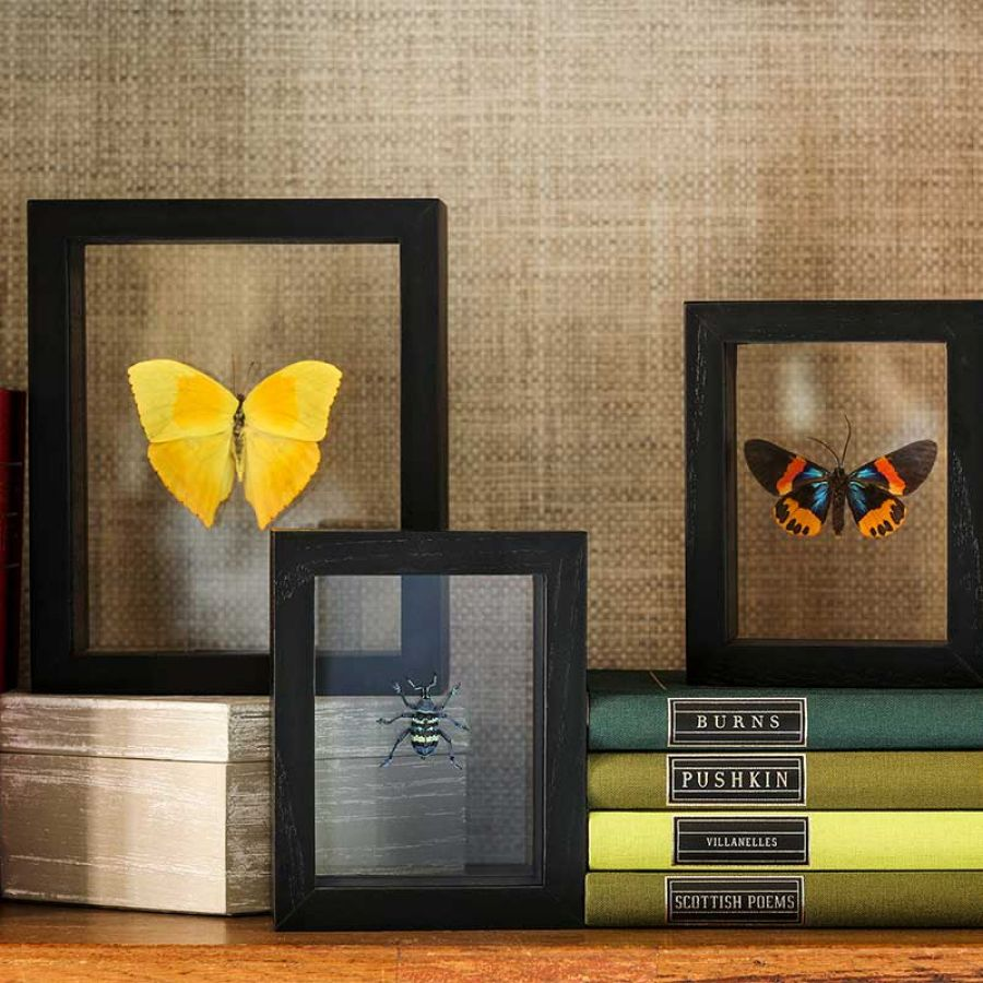 020 Collectable Shelf House Candy Artwork Butterflies Books